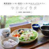 【鈴鹿市】ヤサシイウタ・観葉植物いっぱいナチュラルカフェ『野菜たっぷりランチ』ヘルシーで美味しい!
